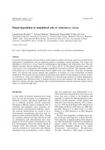 Phenol degradation by immobilized cells of Arthrobacter citreus
