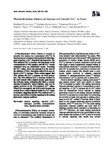 Phenylethylamine Induces an Increase in ... - Semantic Scholar