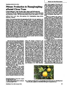 Phloem Production in Huanglongbing- affected Citrus Trees