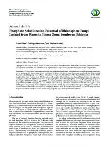 Phosphate Solubilization Potential of Rhizosphere Fungi Isolated from