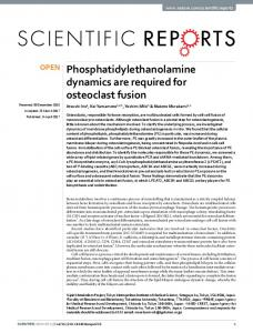 Phosphatidylethanolamine dynamics are required for