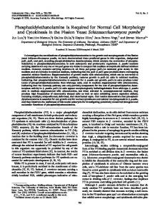 Phosphatidylethanolamine Is Required for Normal ... - Eukaryotic Cell