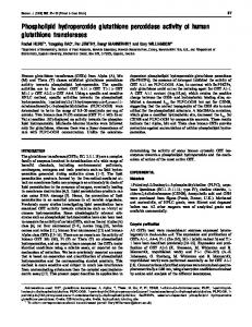 Phospholipid hydroperoxide glutathione peroxidase activity of human ...