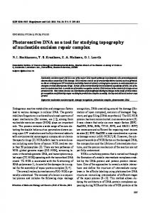 Photoreactive DNA as a tool for studying topography of nucleotide ...