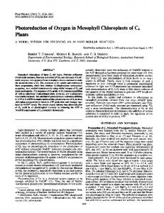 Photoreduction of Oxygen in Mesophyll Chloroplasts of C4 - NCBI