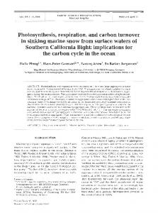 Photosynthesis, respiration, and carbon turnover in ... - Inter Research