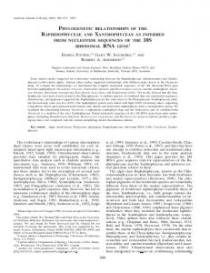 phylogenetic relationships of the raphidophyceae and xanthophyceae ...