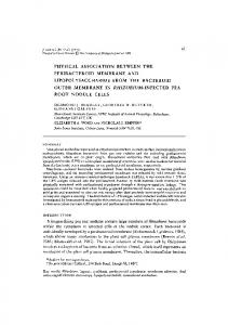 PHYSICAL ASSOCIATION BETWEEN THE PERIBACTEROID ...
