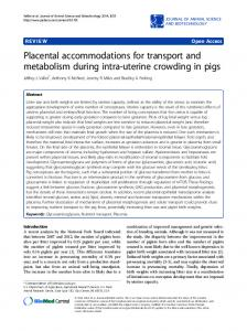Placental accommodations for transport and ... - Semantic Scholar