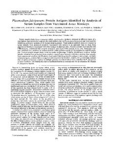 Plasmodium falciparum: Protein Antigens Identified by Analysis of