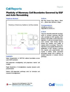 Plasticity of Mammary Cell Boundaries Governed by EGF ... - Cell Press