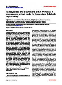 Podocyte loss and albuminuria of KK-Ay mouse: A spontaneous ...