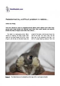 Pododermatitis, a difficult problem in rabbits - Medirabbit