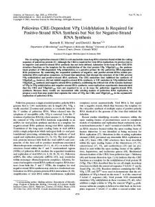 Poliovirus CRE-Dependent VPg Uridylylation Is ... - Journal of Virology