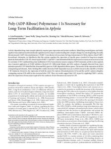 Poly-(ADP-Ribose) Polymerase-1 Is Necessary for Long-Term ...