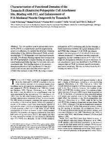 Polypeptide: Cell Attachment Site, Binding with Fll, and E