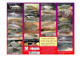 Poster - Freshwater Fish Group & Fish Health Unit