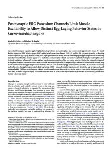 Postsynaptic ERG Potassium Channels Limit ... - Semantic Scholar