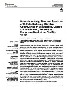 Potential Activity, Size, and Structure of Sulfate-Reducing Microbial