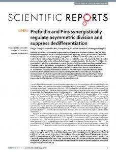Prefoldin and Pins synergistically regulate ... - Semantic Scholar