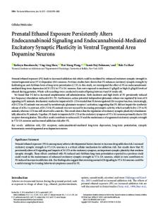 Prenatal Ethanol Exposure Persistently Alters Endocannabinoid ...