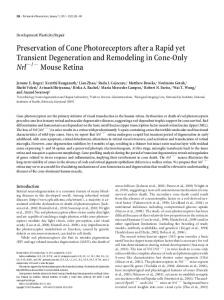 Preservation of Cone Photoreceptors after a Rapid yet Transient ...