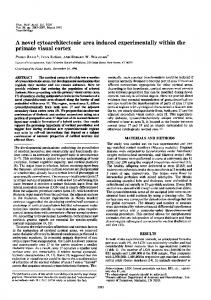 primate visual cortex - Semantic Scholar