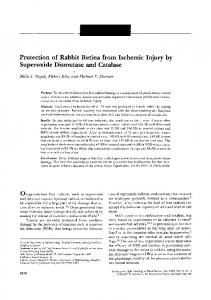 Protection of Rabbit Retina from Ischemic Injury by Superoxide ... - IOVS