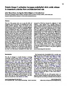 Protein kinase C activation increases endothelial nitric oxide release ...