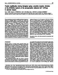 Protein modification during biological aging: selective tyrosine ... - NCBI