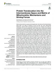 Protein Translocation into the Intermembrane