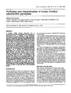 Purification and characterization of human 3-methyl - BioMedSearch