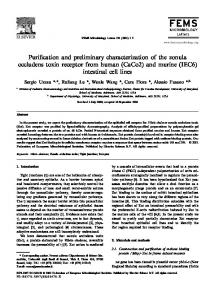 Purification and preliminary characterization of the zonula occludens ...