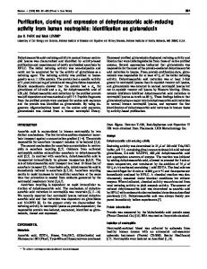 Purification, cloning and expression of dehydroascorbic acid-reducing