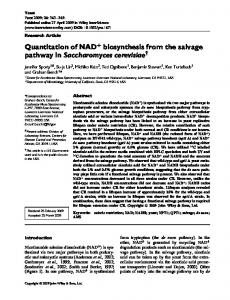 Quantitation of NAD+ biosynthesis from the salvage pathway in ...