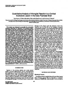 Quantitative Analysis of Microglial Reaction to a
