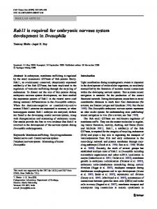 Rab11 is required for embryonic nervous system development in ...