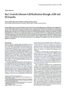 Rac1 Controls Schwann Cell Myelination through cAMP and NF2/merlin