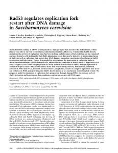 Rad53 regulates replication fork restart after DNA damage in ...
