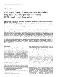Raf Kinase Inhibitory Protein is Required for Cerebellar Long-Term ...