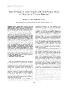 Rapsyn Variants in Ciliary Ganglia and Their ... - Wiley Online Library