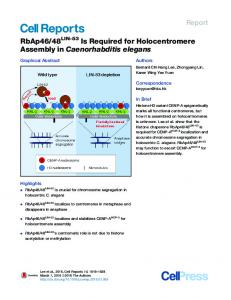 RbAp46/48LIN-53 Is Required for Holocentromere ... - Cell Press