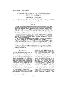re-evaluation of taxonomic characters of idiosepius