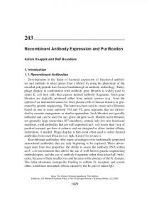 Recombinant Antibody Expression and Purification - Bio-Rad Antibodies