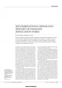 recombinational repair and restart of damaged replication forks - Nature