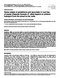 Redox states of glutathione and ascorbate in root tips ... - BioMedSearch