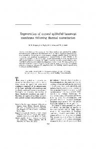 Regeneration of corneal epithelial basement membrane ... - IOVS