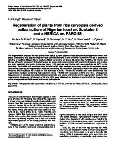 Regeneration of plants from rice caryopsis derived callus culture of