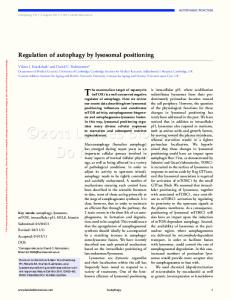 Regulation of autophagy by lysosomal positioning