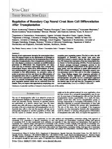 Regulation of Boundary Cap Neural Crest Stem Cell ... - CiteSeerX